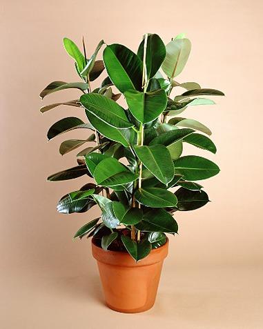 Piante da ufficio moderno dracena ficus felce orchidea - Pianta da ufficio ...